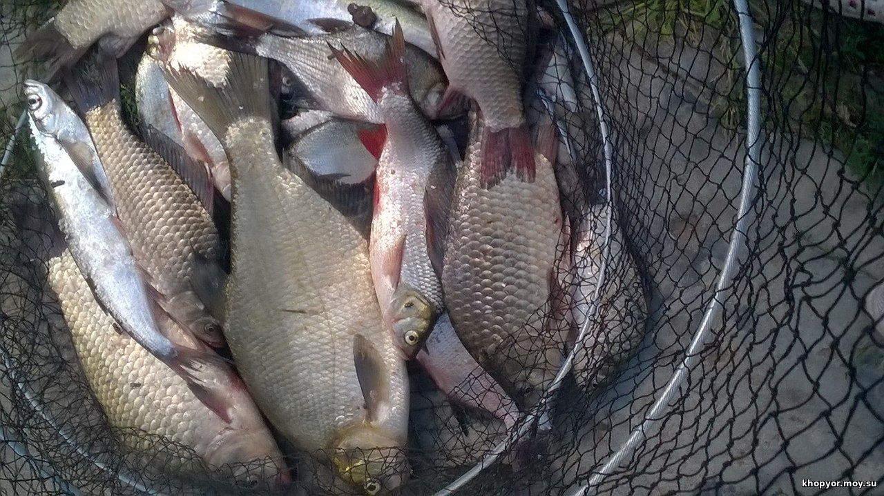 Рыбалка новости а не отчеты открытая вода