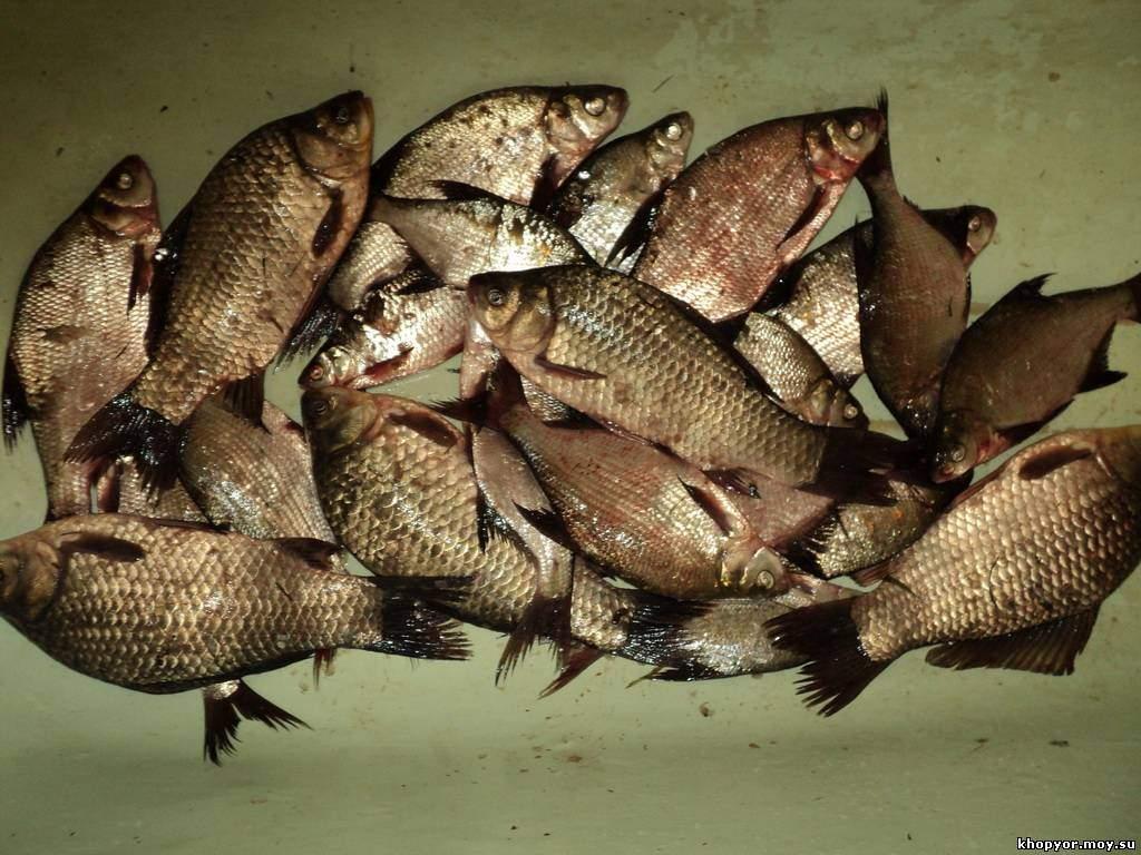 как развести прикормку для рыбалки