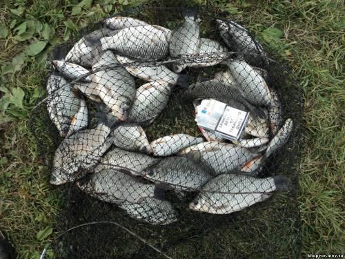 Клев рыбы и погода Активность рыб в зависимости от погоды