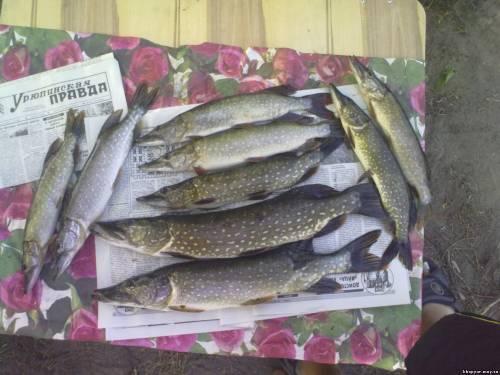 рыбаков бузулук