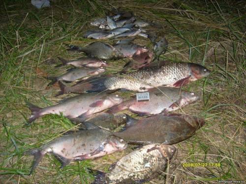 рыбалка на дону в воронежской области снасти